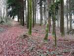 Visite à la forêt domaniale - Arnac-Pompadour